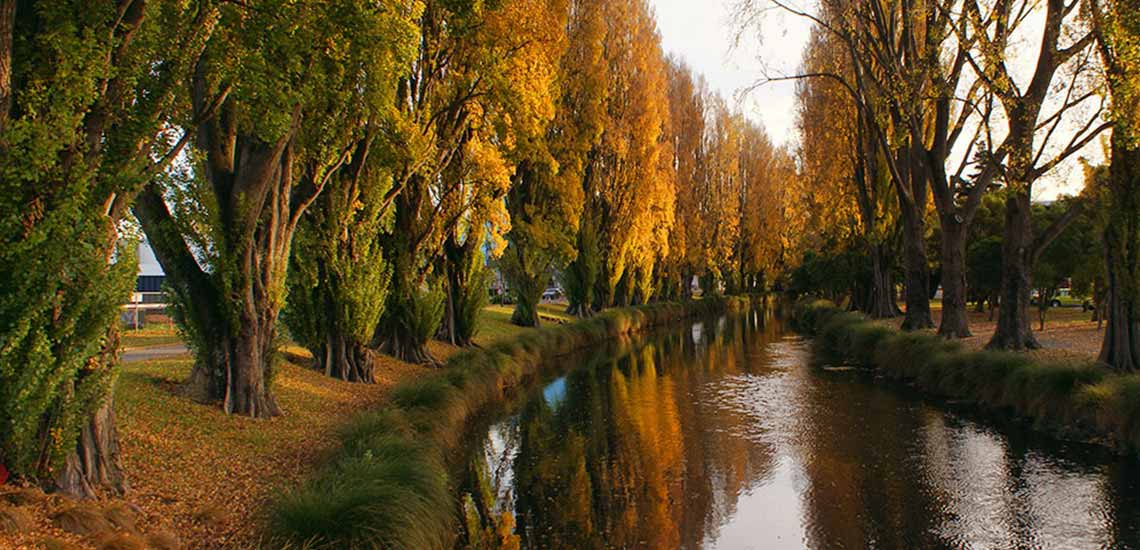 autumn trees along river